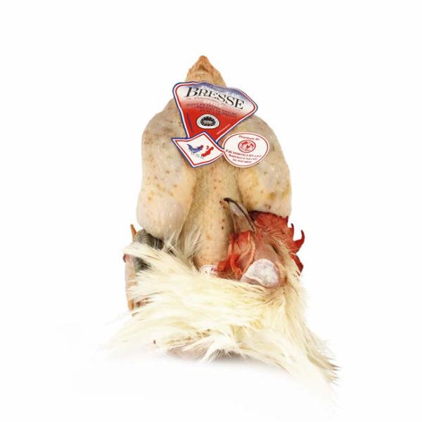 Pollo di Bresse AOC femmina