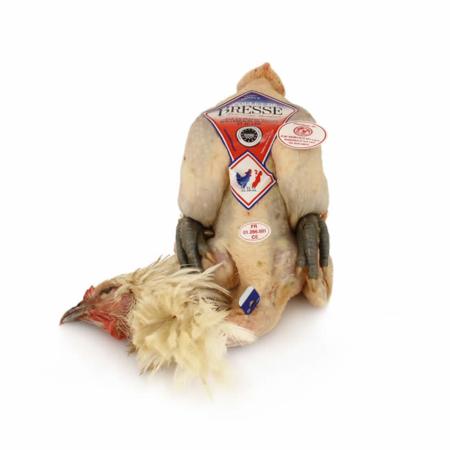 Pollo di Bresse AOC maschio